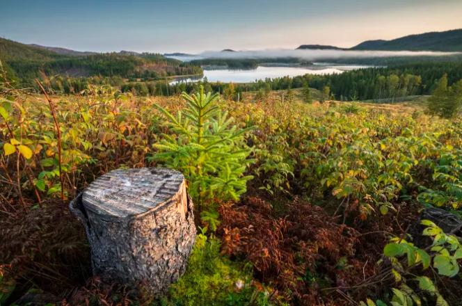 Etwa 33 Prozent der Landesfläche sind in Norwegen mit Wald bedeckt– ähnlich wie in Deutschland©Steinar Johansen